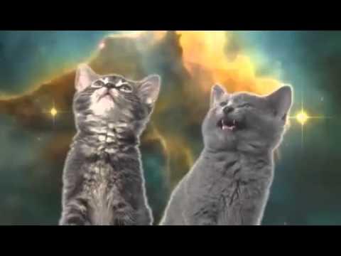 Chanson des chats russes (Приколюха хрень)