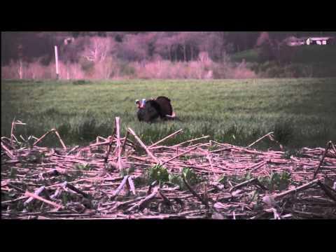 2014 Spring Gobbler Hunt