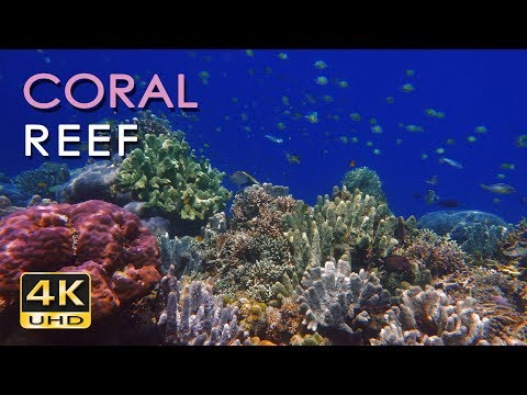 4K Coral Reef - Tropical Fish - Underwater Ocean Sounds - Relaxing Nature  - Ultra  - 2160p