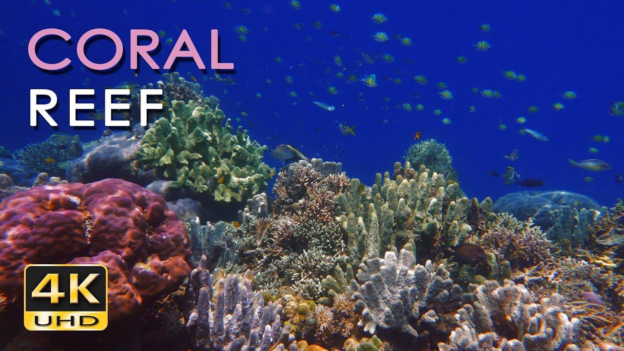 4K Coral Reef