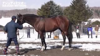 アジュディミツオー(Adjudi Mitsuo)-アロースタッド種牡馬展示会2015