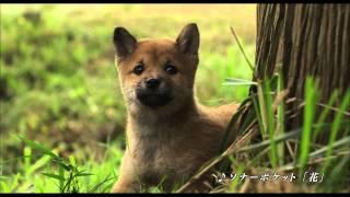 映画『ひまわりと子犬の7日間』 2013年3月16日(土)新宿ピカデリー他...