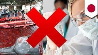 U.N. court says Japan has enough scientific info on how whales die