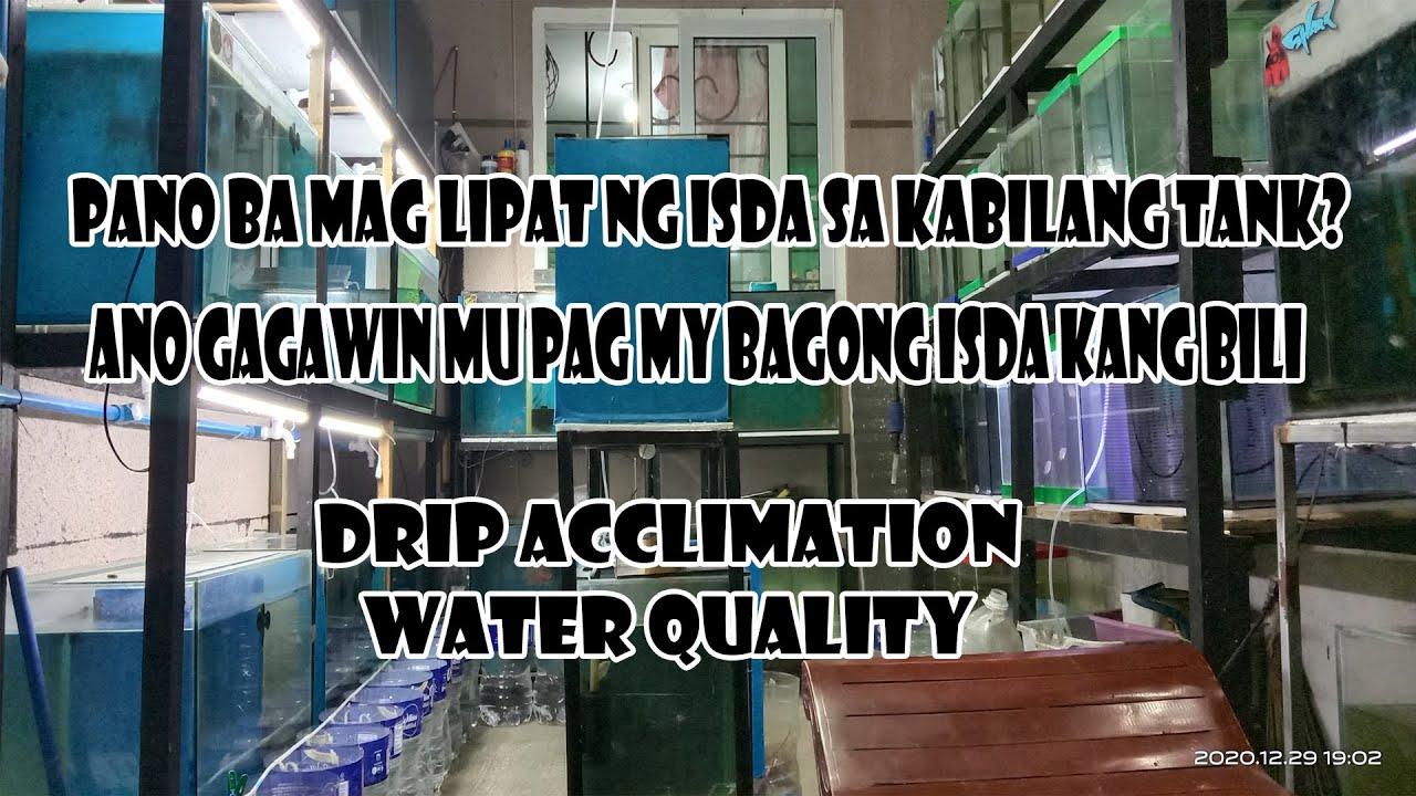 Download drip acclimation and water quality preparation(para maiwasan ang water shock)by:FISDA TV
