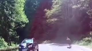 accident de voiture et cheval, حادث بين السيارة والحصان. من الذي كسب؟