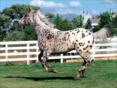 os-mais-lindos-cavalos
