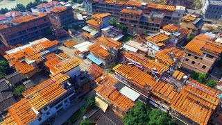 Chinese village turns into dazzling orange colour as farmers dry seasonal fruit using the traditiona