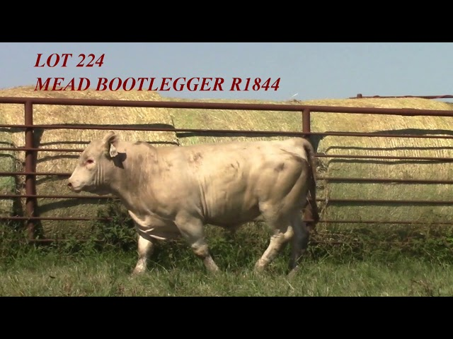 Mead Angus Lot 224