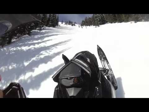 Grizzly Bear Snowmobile