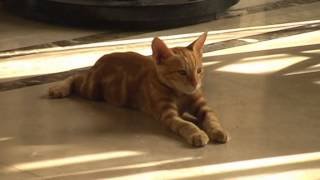 Мраморный кот Египта. Marble cat Egypt.