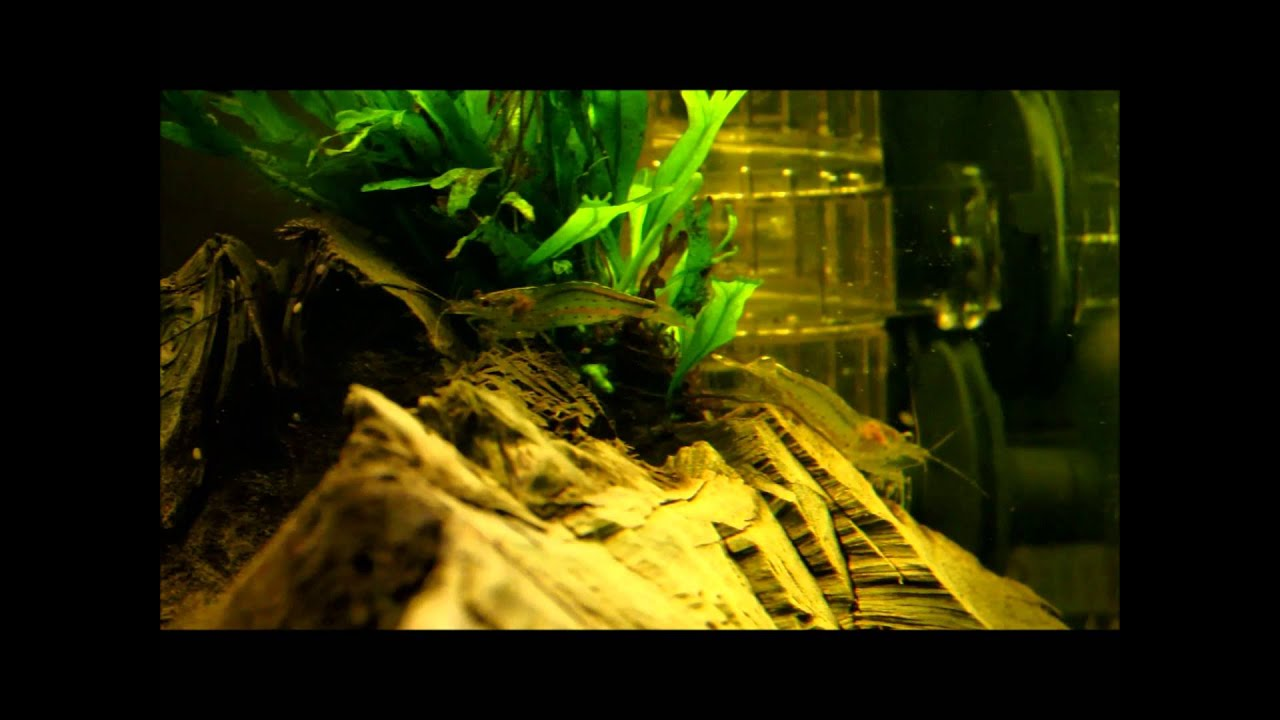 54l aquarium mit led beleuchtung youtube. Black Bedroom Furniture Sets. Home Design Ideas