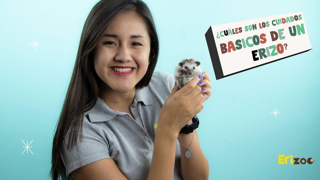¿Cuáles son los cuidados básicos de un erizo? | Erizoo México