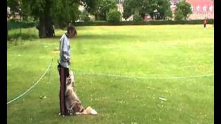 Donna & Quinn Obedience Ring Training [beginner Dog]