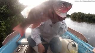 Pescador solitario    muy buenos Pargos