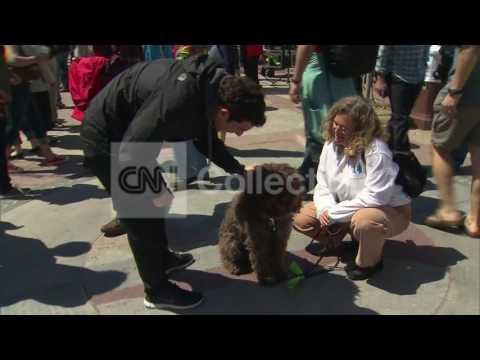 MA:COMFORT DOGS IN BOSTON (NICE VIDEO)