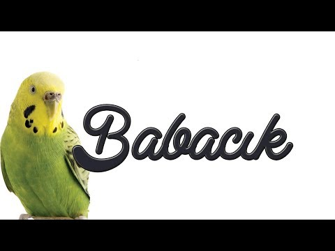"BABACIK: Teach Your Parrot and Budgerigar to ""DADDY"""