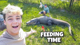 MASSIVE REPTILE BACKYARD FARM FEEDING!!!