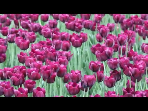 RELAXATION MUSIC VIDEO / Sunrise / JVNA