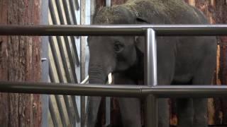 Słonie w śląskim ZOO