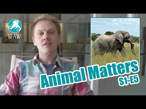 IFAW's Animal Matters - September 29th, 2017 (S1-E5)