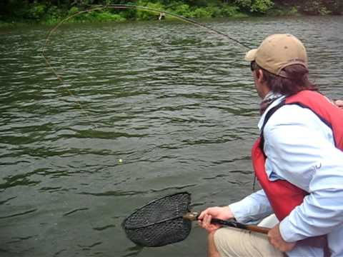 Catching a rainbow trout on yough river with laurel for Youghiogheny river fishing
