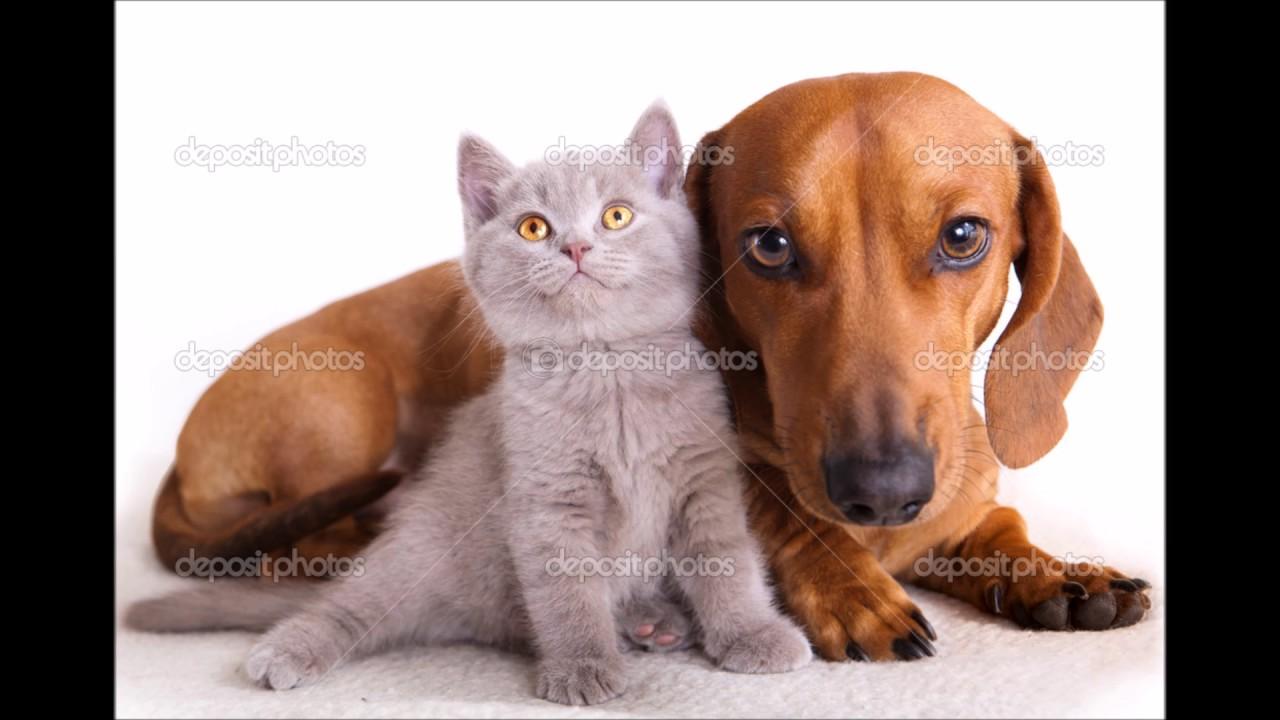Мой фильм про собак и кошек - YouTube