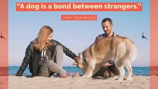 A dog is a bond between strangers