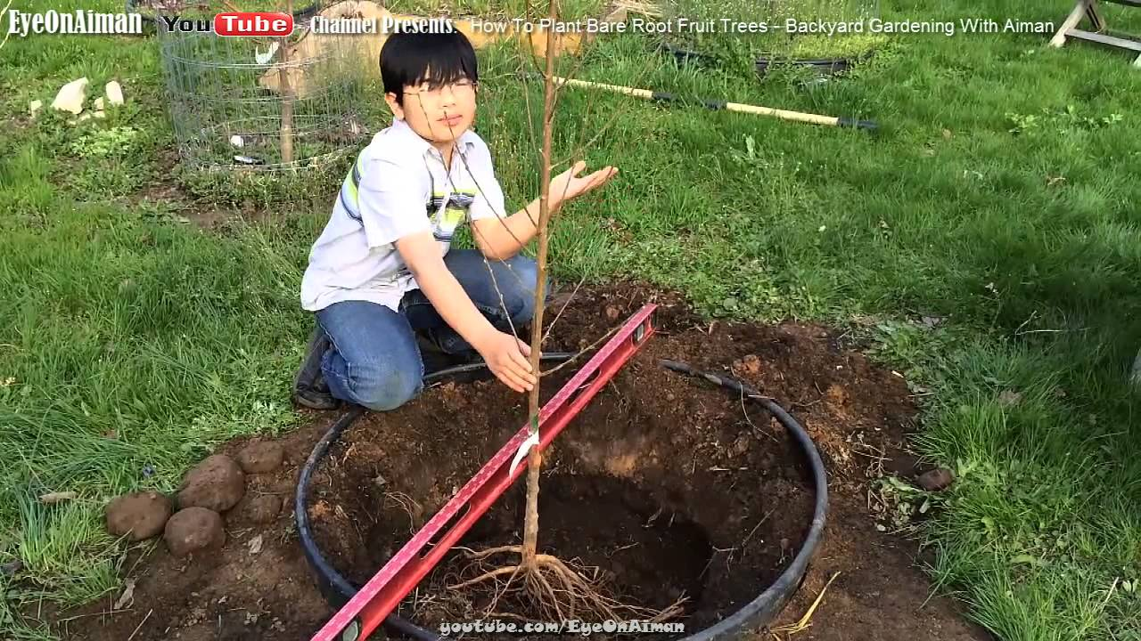 How To Plant Bare Root Fruit Trees In Your Backyard