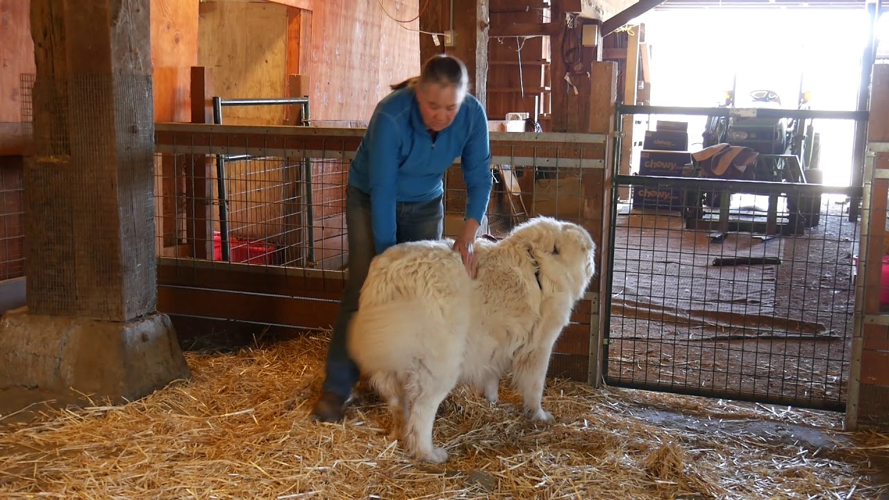 """Partial Late Winter """"Triage"""" Clipping - The Grooming Series"""