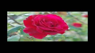 Video Neil Diamond Spanish Harlem download MP3, 3GP, MP4, WEBM, AVI, FLV September 2018