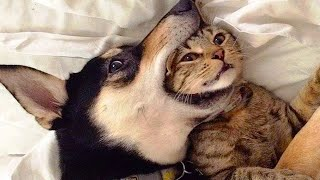 😂 Funniest Cats 😸 And 🐶 Dogs Videos - Awesome Cute And Funny Pets Videos