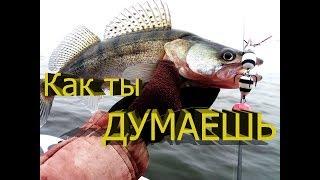 ЭТОТ ЦВЕТ ВОЙДЕТ В ТОПЫ / ловля судака на джиг / рыбалка на судака / Судак
