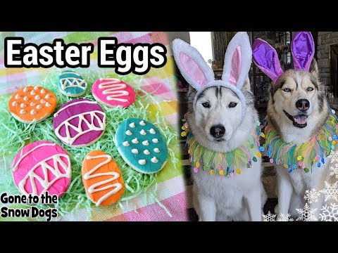 How to Make Easter Eggs for Dogs | DIY Dog Treats 117