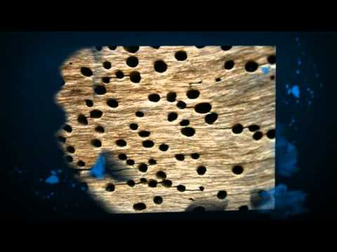 Heat Treatment For Termites