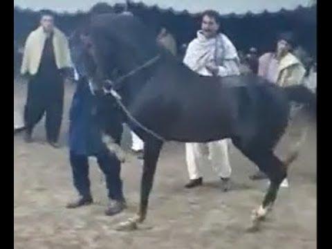 New top 5 horse dance in Pakistan 2019 - 9 - Ghora dance 2019