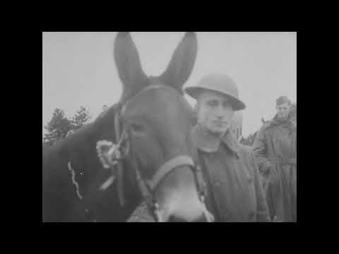 Post Armistice Training, 82nd Division [1918-1919]