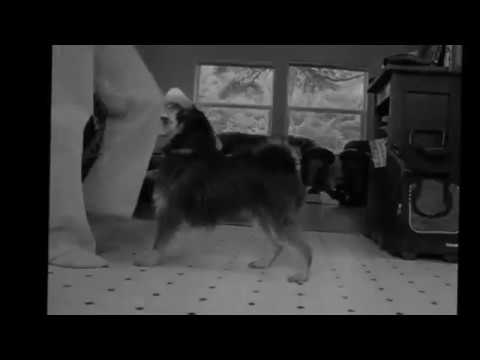 funny videos of dogs|Funny Dogs Videos |The Funniest Videos