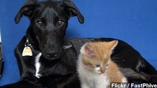 Cats, Dogs Have 'superpower' Vision: Study