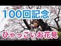 【ラリルれ100回】サクラサク!ひゃっこい記念の花見祭り