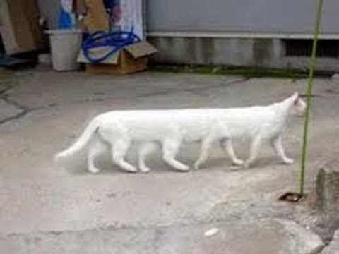 Funny kitten videos | Funny kittens videos | Funny cat videos | Funny cats videos