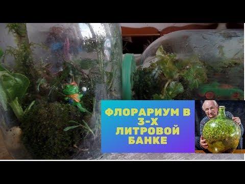 Флорариум своими руками  в стекле. А вы слышали про сад в бутылке Дэвид Латимера?