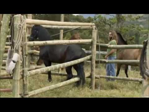 Documental Domador De Caballos Documentales Completos from YouTube · Duration:  44 minutes 49 seconds