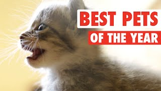 Ultimate Pet Videos of the Year Part 1 || 2015