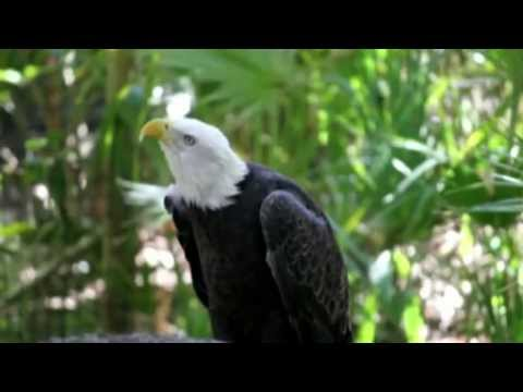 If Eagles Could Talk - Constitution