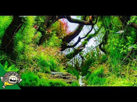 ADA Tokyo, Japan! Aqua Forest. Longfin Neon Tetras! Amazing Plants.