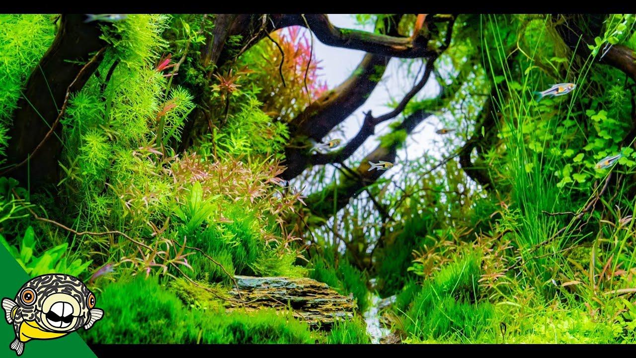 Ada Tokyo Japan Aqua Forest Longfin Neon Tetras
