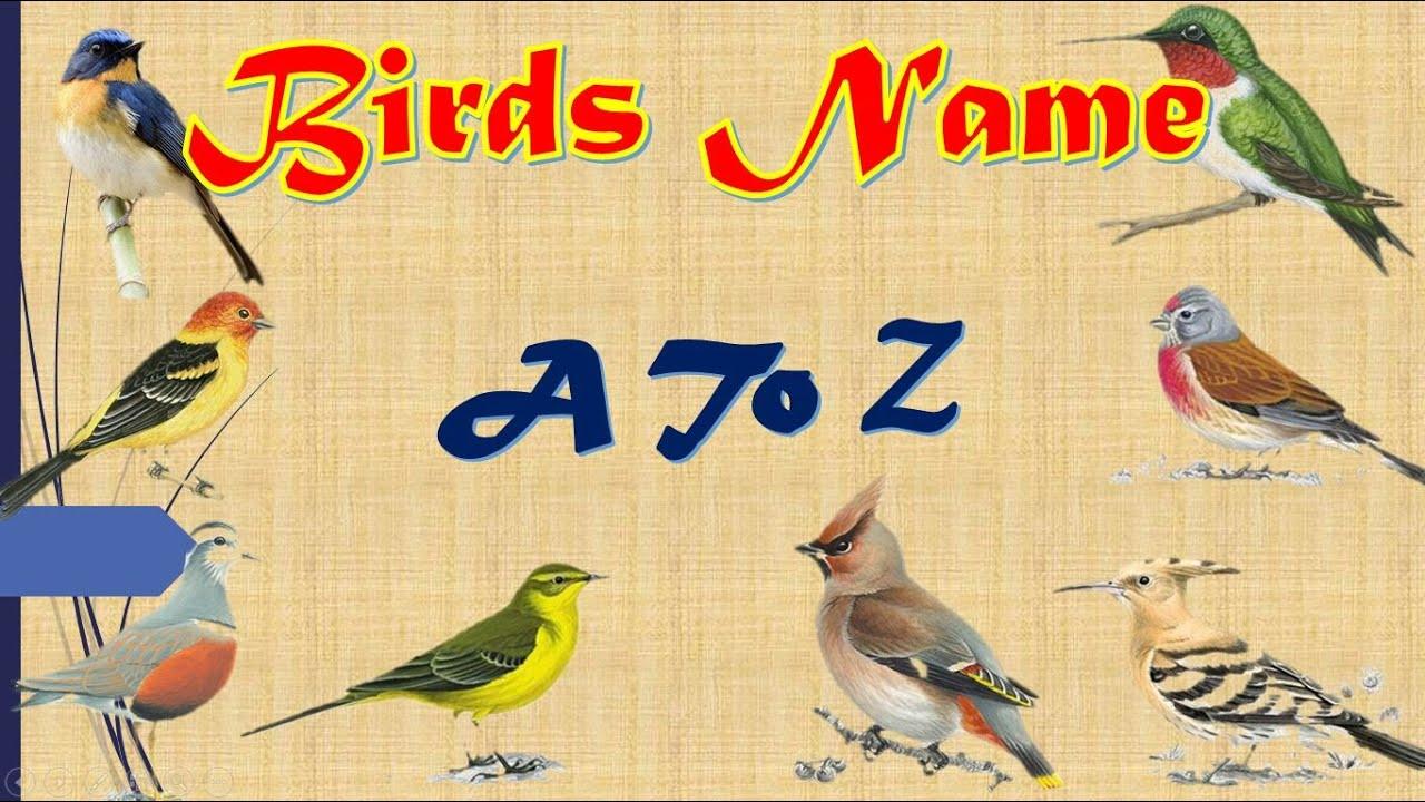 Alphabetically A To Z Birds Name Birds Names For Children In English Youtube