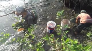 Tháo đìa( ao sen) bắt quá trời cá đồng và tôm toàn cảnh - Electric fishing in Southern of Vietnam