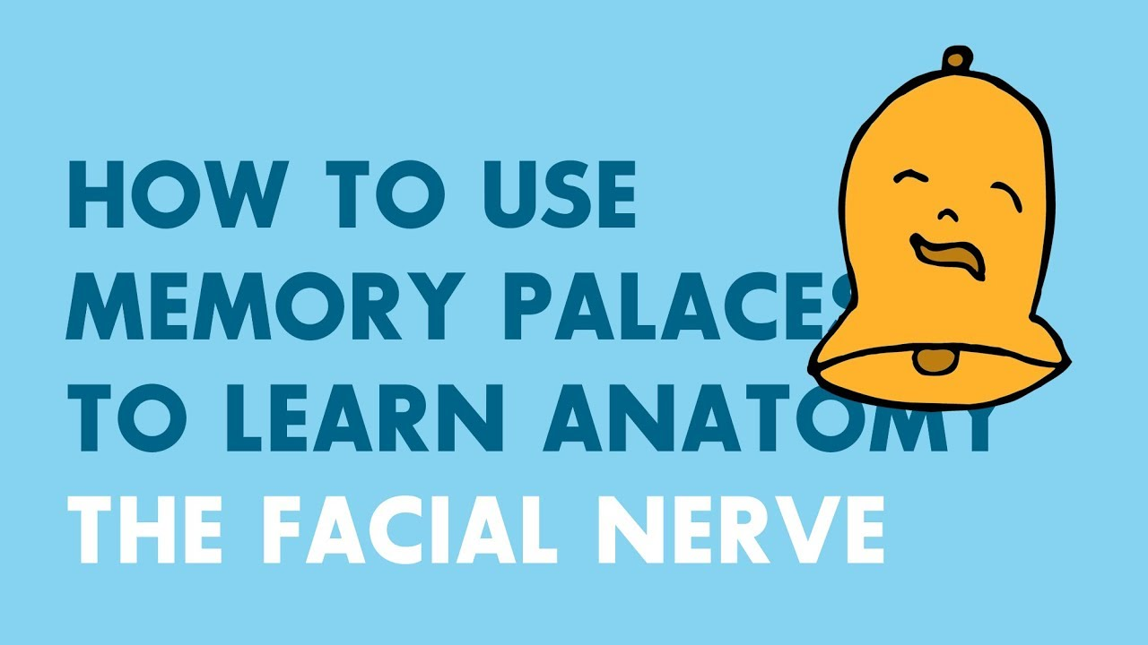 How to Use Memory Palaces in Medical School | Anatomy: Facial Nerve ...