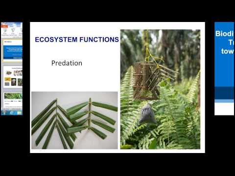 Biodiversity-Ecosystem Function in Tropical  Agriculture